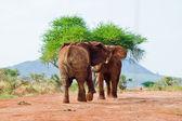 Battaglia degli elefanti — Foto Stock
