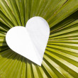 Heart on big leaf — Stock Photo