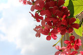 Flower hanging with sky — Stock Photo