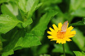 Sunflower with butterfly — Stock Photo