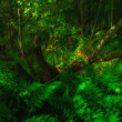 Stock Photo: Photo of lush rain forest