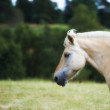 A photo of a white and brown horse in summertime - Stock Photo