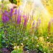 A photo of Garden flowerbed in sunlight — Foto de Stock