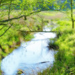 Stock Photo: A photo a small river in the countryside