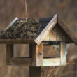 A photo of bird house - feeding place — Stock Photo