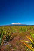 A photo of a Volcano in wilderness in New Zealand — Stock Photo
