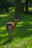 A telephoto of a deer — Stock Photo