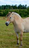 Ett foto av en vit och brun häst i sommartid — Stockfoto