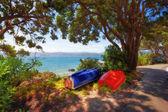 Een foto van een prachtig park aan de zee — Stockfoto