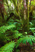 A photo of dark rainforest in New Zealand — Stock Photo