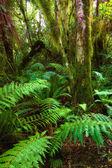 A photo of dark rainforest in New Zealand — Stock Photo