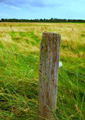 A photo of a fence post — Stock Photo