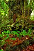 Una foto de la selva — Foto de Stock