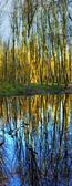 Photo du lac en forêt pendant la saison froide — Photo