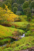 A photo of Countryside in New Zealand ( North Island) — Stock Photo