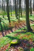 Una foto de un hermoso bosque — Foto de Stock