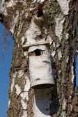 A photo of bird house - feeding place — Stock Photo