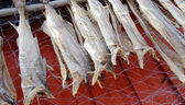 Air dried fish — Stock Photo
