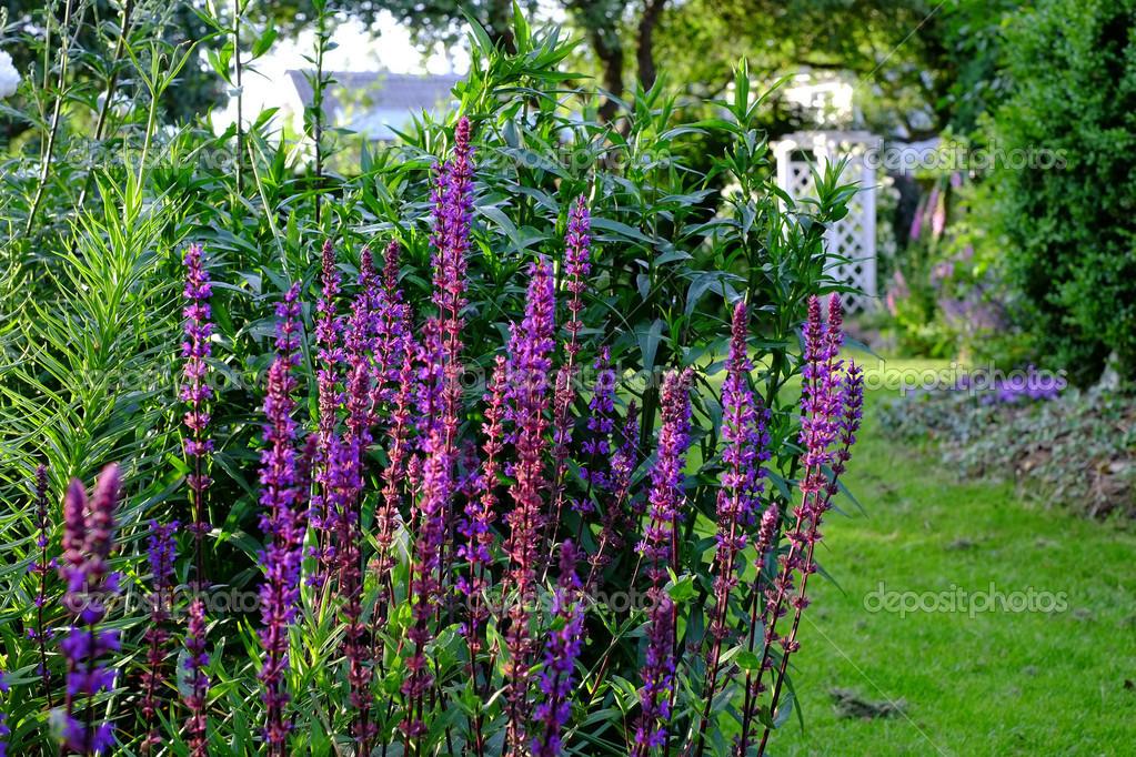 ein foto von blauen gartenblumen — stockfoto © dhoxax #13146419, Gartengestaltung