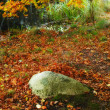 An image of autumn forest — Stock Photo