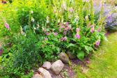 A photo of lush garden in summertime — Stock Photo