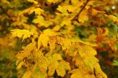 秋天的叶子的照片 — 图库照片