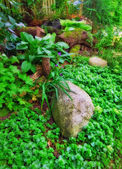 A photo of garden details — Stock Photo