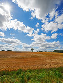 A photo of a cornfield — Stock Photo