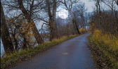 A photo of Moon shine - landscape, road and forest — Stock Photo