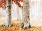 A photo of morning fog in the forest in autumn — Stock Photo