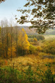 A photo of the forest in autumn colors — Stock Photo
