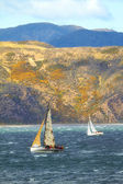 A photo of sailboats racing - New Zealand — Stock Photo
