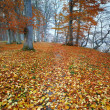Stock Photo: Sunset in autumn forest - saturated forest in fall