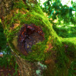 A photo green moss on a tree — Stock Photo