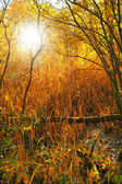 Landscape photo an early morning in the fall — Stock Photo