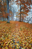 Sunset in autumn forest - a saturated forest in the fall — Stock Photo