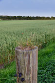 A photo of farmland and countryside — ストック写真