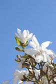 リンゴの花と青い空のアイコン写真 — ストック写真