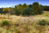 Autumn landscape in Denmark — Stock Photo