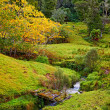 A photo of Countryside in New Zealand ( North Island) — Stock Photo #19769395
