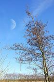 写真、月と夜と冬の木 — ストック写真