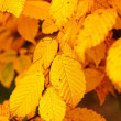 A photo of autumn leaves and trees — Stock Photo