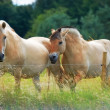 Stock Photo: Telephoto of horses in natural setting