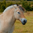 A photo of a white horse - Stock Photo