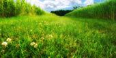 沼泽和草甸-丹麦的照片 — 图库照片