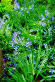A photo of blue flowers and garden wilderness — Stock Photo