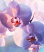 A photo of Beautiful Orchids — Foto Stock