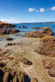A sea scape photo from Karaka Bay, Wellington, Hawaii — Stock Photo