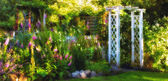 Garden dreams at sunset in summertime — Stock Photo