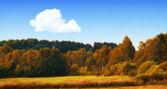 Zdjęcia lasu w kolory jesieni — Zdjęcie stockowe